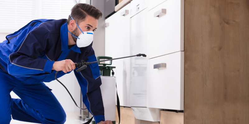 Home Pest Control in North Wilkesboro, North Carolina