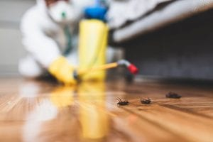 Don't Put Up with Roaches -- Get Roach Removal