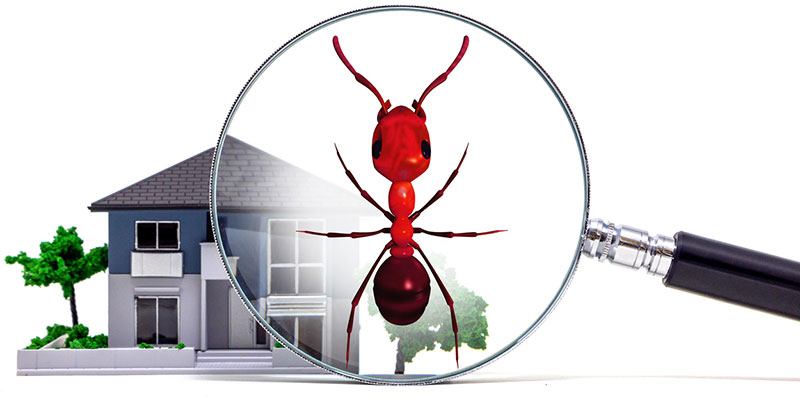 Why Do You Need a Real Estate Pest Inspection?